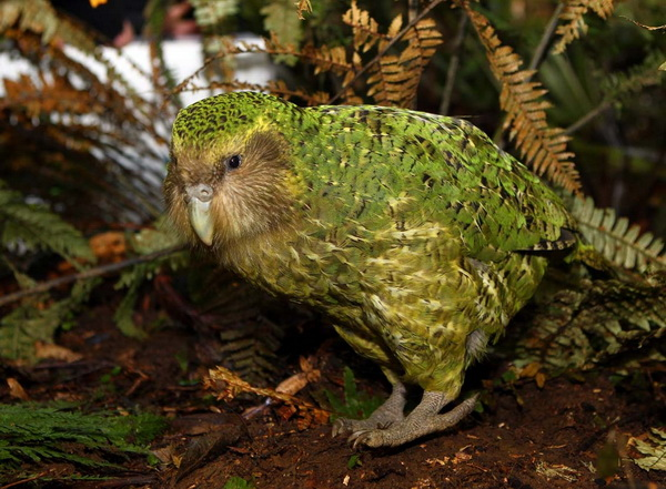 10-ptic-kotorye-otkazalis-letat-9