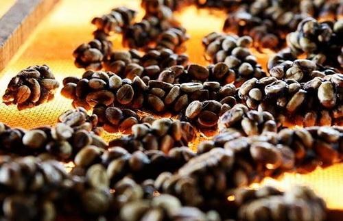 Самый дорогой кофе в мире из помета лювак (цена)