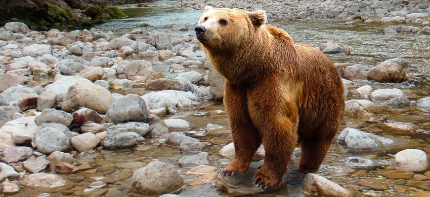 белый медведь интересные факты для детей
